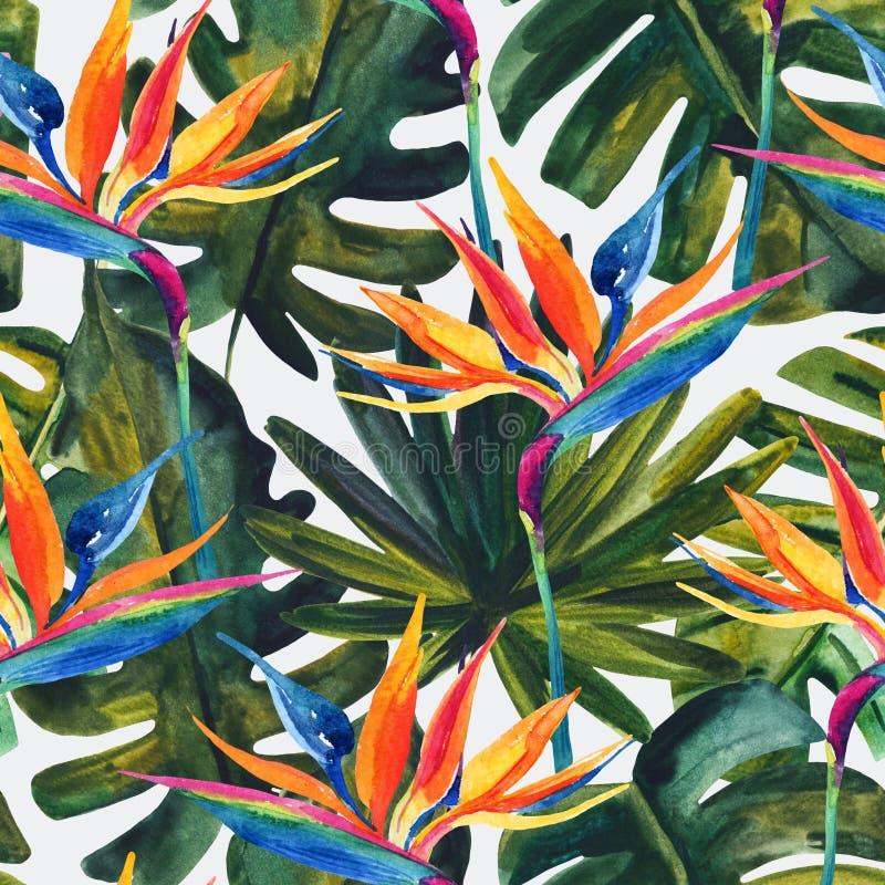 与鸟天堂花, monstera,棕榈叶的水彩热带无缝的样式 库存例证