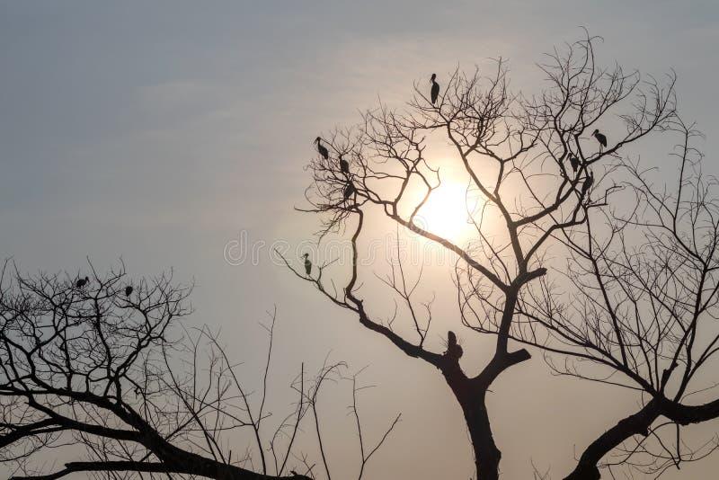 与鸟的现出轮廓的干燥分支在阳光下 图库摄影
