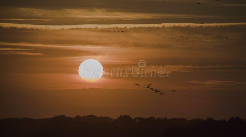 与鸟类迁徙的日落 免版税图库摄影
