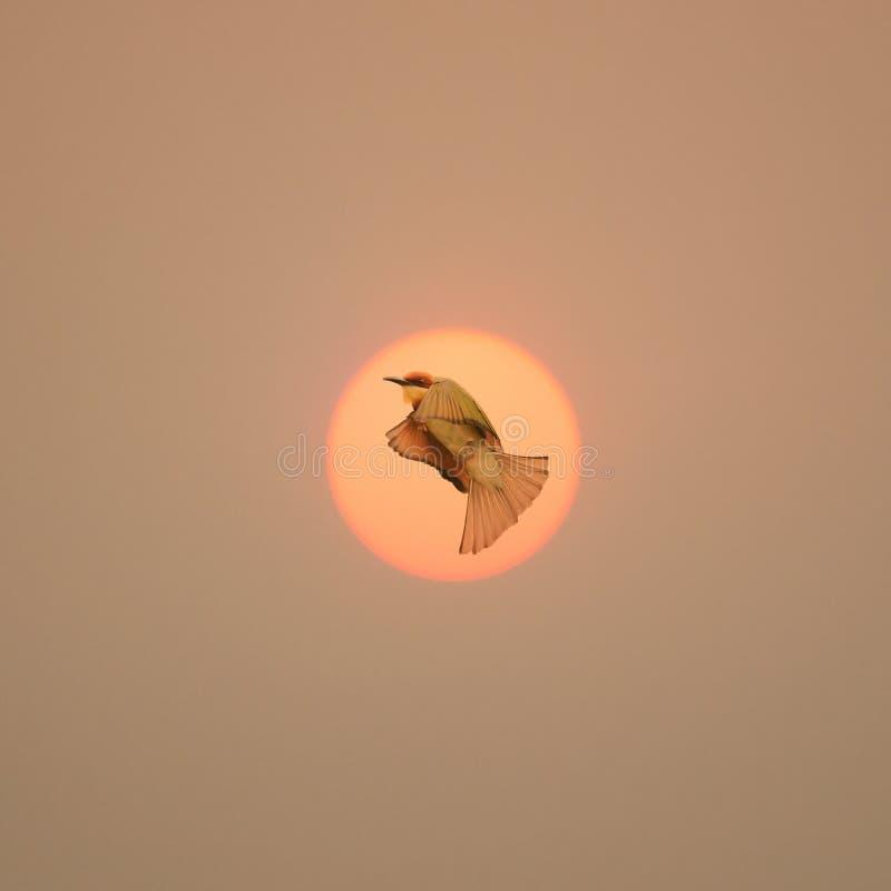 与鸟飞行的自由标志通过太阳 库存照片