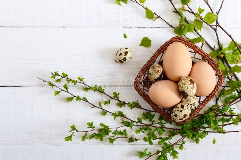 与鸡的篮子和鹌鹑蛋,在白色木背景的绿色年轻分支 复活节春天背景 库存照片