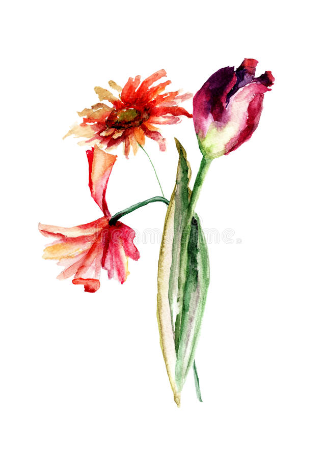 与鸦片和郁金香和格伯flowe的原始的花卉背景 向量例证