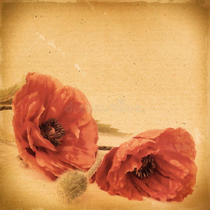 与鸦片的葡萄酒花卉背景在一棕色backgrou开花 免版税库存照片