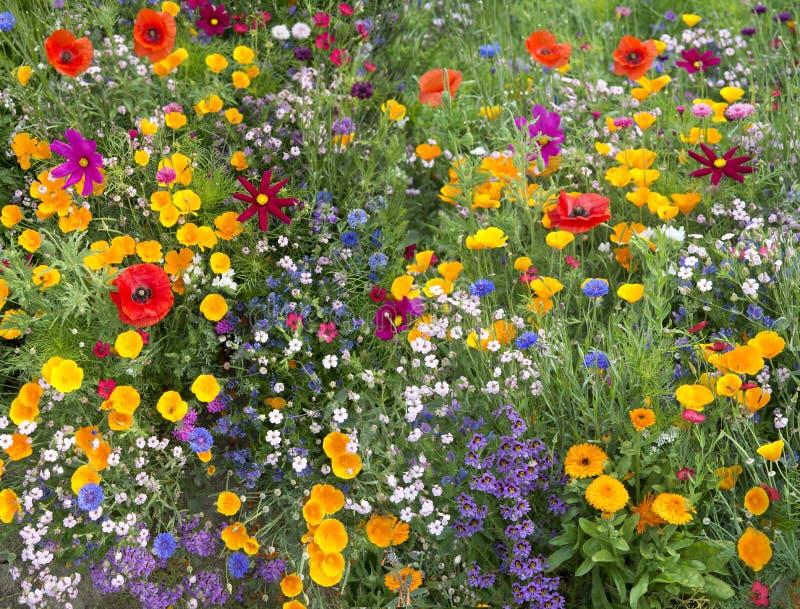 与鸦片的野花混合 免版税库存图片