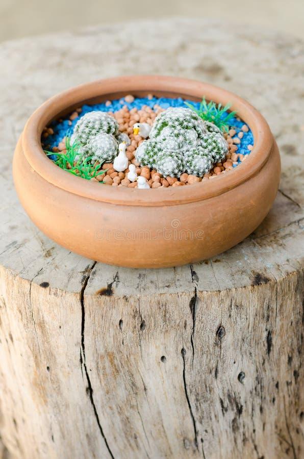Download 与鸭子木偶雕塑的Mammillaria Humboldtii在罐 库存照片 - 图片 包括有 沙漠, 设计: 62528314