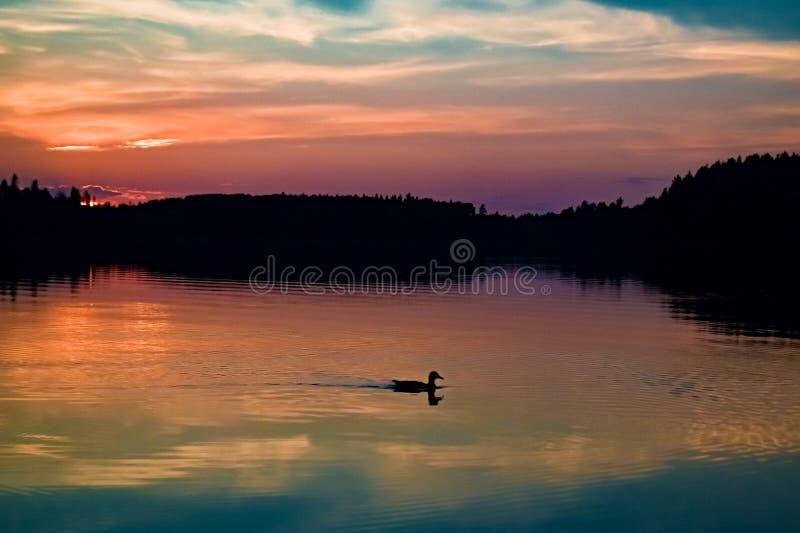 与鸭子的sillouete的日落风景 图库摄影