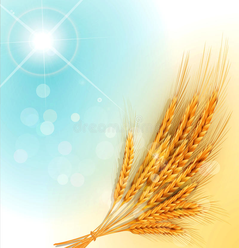 与麦子和太阳的金耳朵的传染媒介发出光线 皇族释放例证