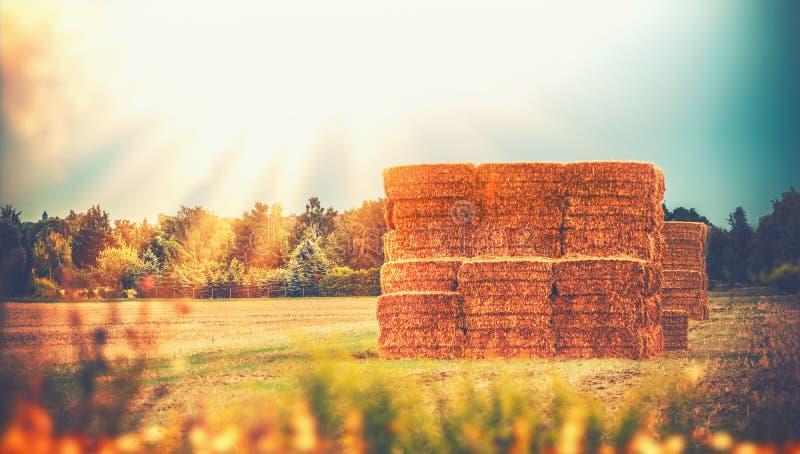 与麦子干草堆或秸杆大包的农村晚夏国家风景在领域,农业农场 库存图片