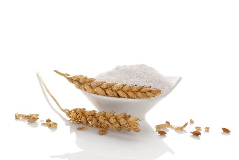 与麦子耳朵的小麦面粉 库存照片