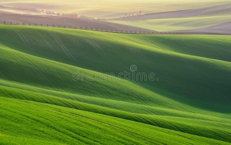 与麦田的巨大夏天风景 在绿色的天然泉农村风景 与条纹和W的绿色麦田 免版税库存图片