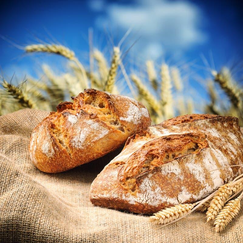 与麦田的新近地被烘烤的传统面包在背景 图库摄影
