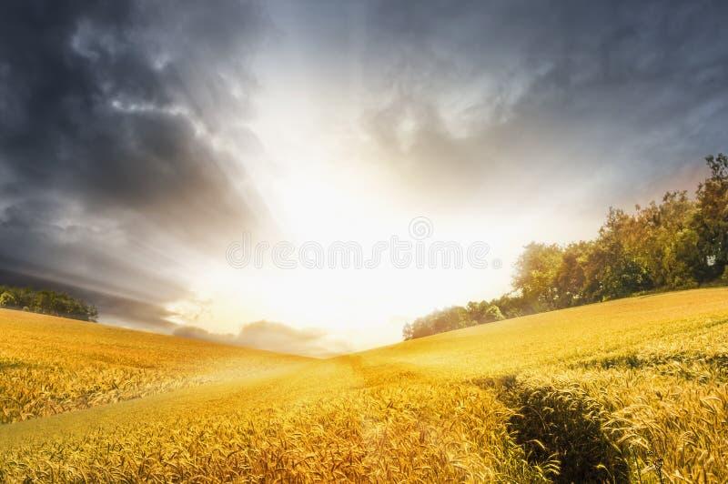 与麦田的秋天风景在风雨如磐的日落天空 免版税库存照片