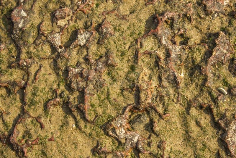 与黄沙和绿草海藻的一块红色白色石头 自然毛面纹理 免版税库存图片