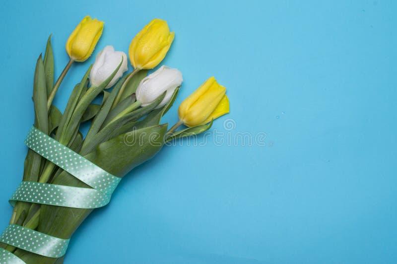 与黄色丝带的黄色郁金香在蓝色 免版税库存照片