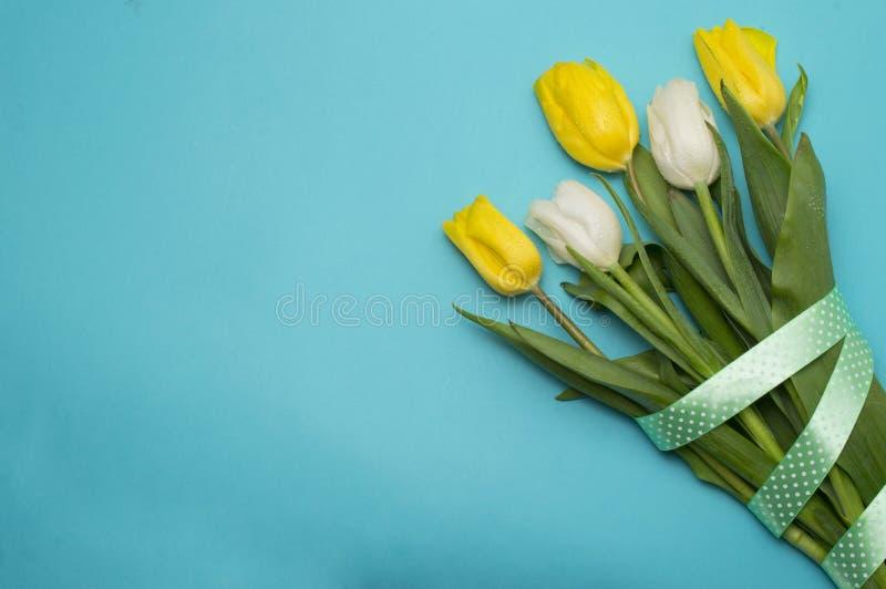 与黄色丝带的黄色郁金香在蓝色 库存照片