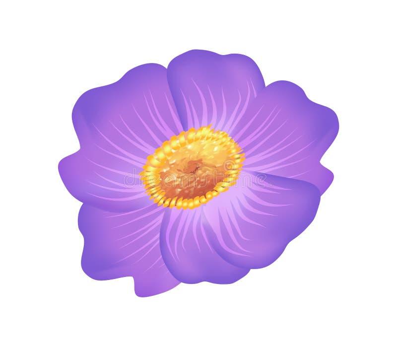 与黄色中心传染媒介的Pasque紫色花 皇族释放例证