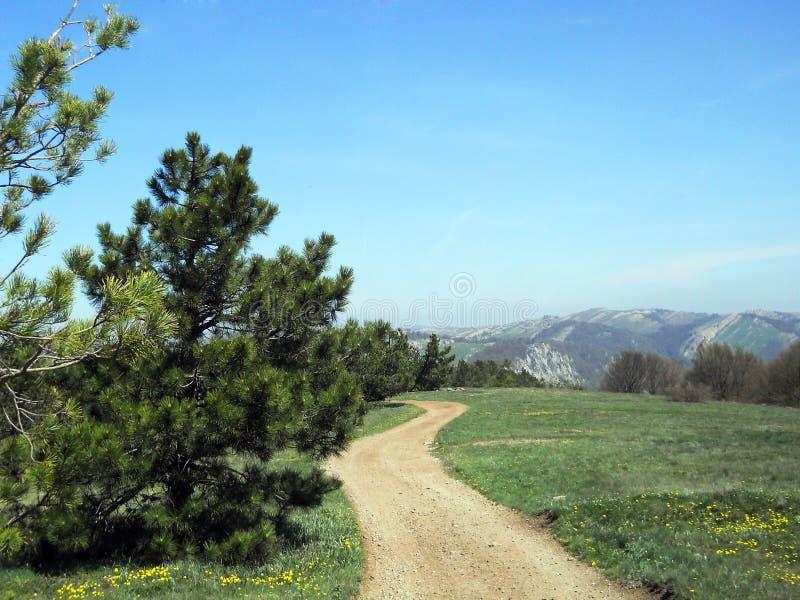 与黄色供徒步旅行的小道的美好的山风景在一块花田 在春天的克里米亚半岛山 免版税库存图片