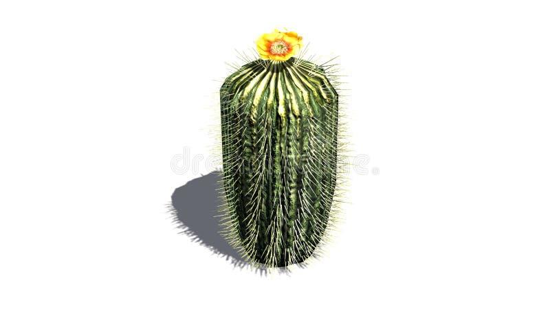 与黄色开花的唯一桶式仙人掌 皇族释放例证