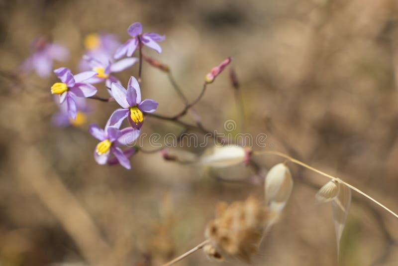 与黄色心脏的紫色花 免版税库存图片