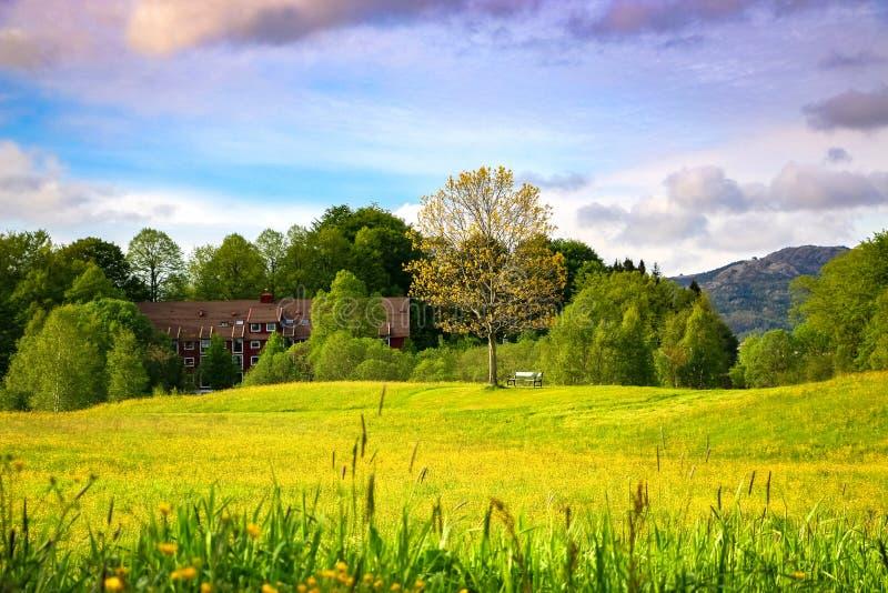 与黄色毛茛公园,隆娜特里、一条空的长凳和云彩的春天风景在五颜六色的天空 免版税库存照片