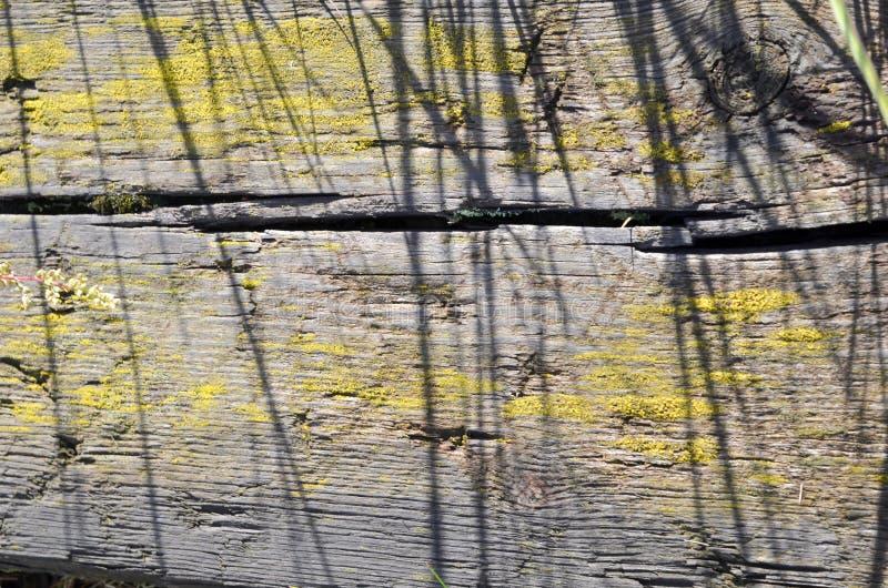 与黄色油漆的老腐烂的灰色木头 库存照片