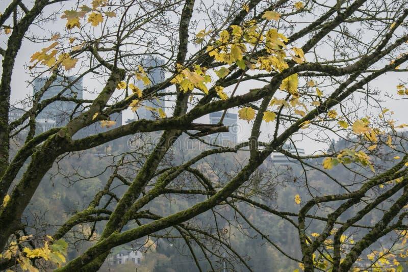 与黄色的秋天树在公园离开在卢森堡市 库存图片