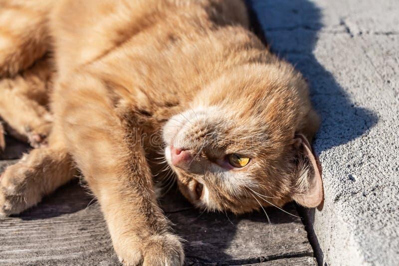 与黄色眼睛和桃红色鼻子的美丽的明亮的红色小猫在老灰色长木凳有灰色具体背景 库存图片