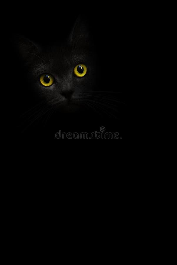 与黄色眼睛的垂直的图象恶意嘘声画象看在黑背景的阴影外面 逗人喜爱的黑暗的小猫 猫hea 库存图片