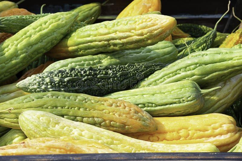 与黄色种子存贮的苦涩金瓜的耕种 库存图片