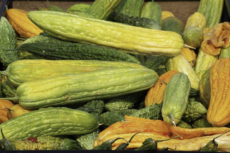 与黄色种子存贮的苦涩金瓜的耕种 免版税库存图片
