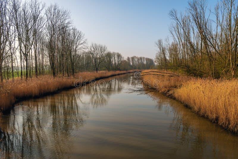 与黄色芦苇和光秃的树的弯曲的小河反射了 库存照片
