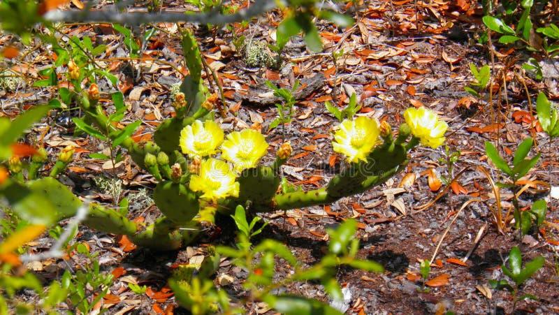 与黄色花的仙人掌在温暖的天 库存照片
