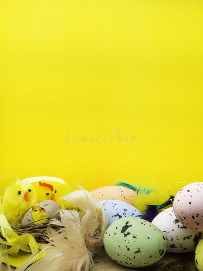 与黄色鸡的复活节装饰构成筑巢,颜色鸡蛋和五颜六色的羽毛在木板 免版税图库摄影