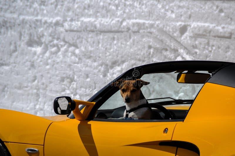 与黄色sportscar的Snowwalls在Hochalpenstrasse在春天 免版税库存照片