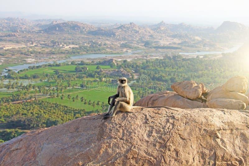 与黑体字或口鼻部的一只猴子在一座山顶部在印度,亨比,坐登上Hanuman 图库摄影