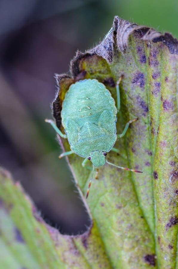 域, 植物群, 森林, 草, 绿色, 草本, 昆虫, 叶子, 宏指令, 本质, 若虫图片