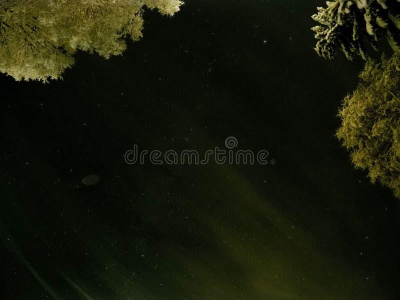 与黑暗的星夜空的原始白色积雪的树 库存图片