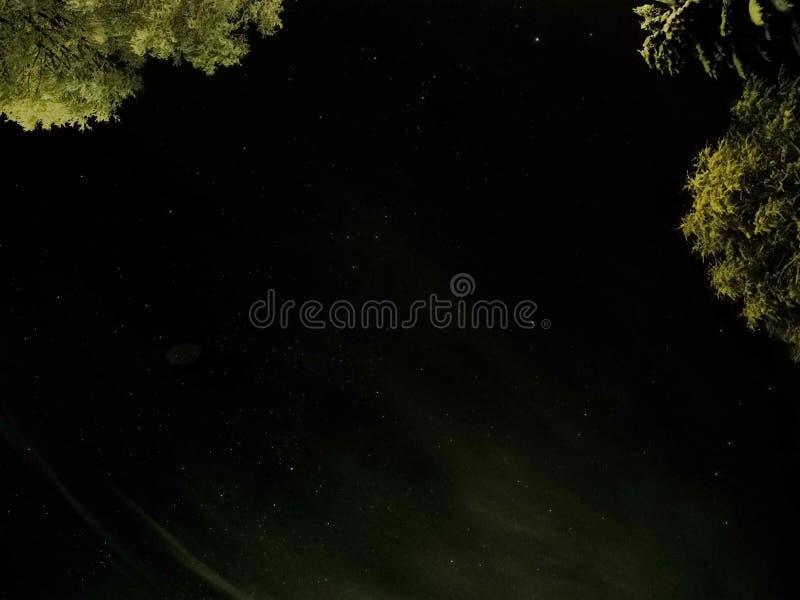 与黑暗的星夜空的原始白色积雪的树 免版税库存照片
