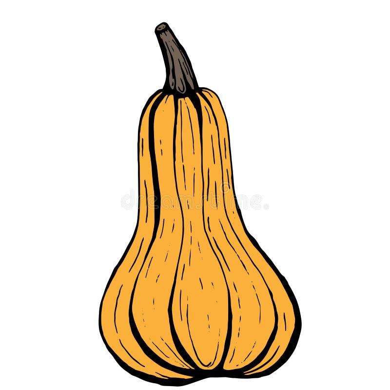 与黑概述的橙色长的胡桃南瓜在白色背景,简单的传染媒介动画片例证 库存例证
