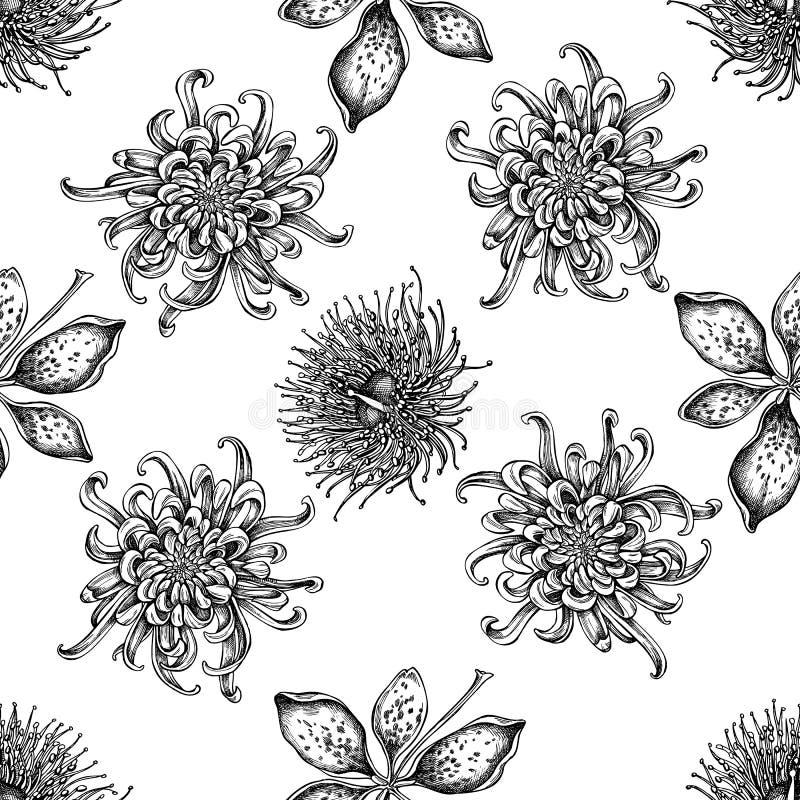 与黑白日本菊花,黑莓百合,玉树花的无缝的样式 皇族释放例证