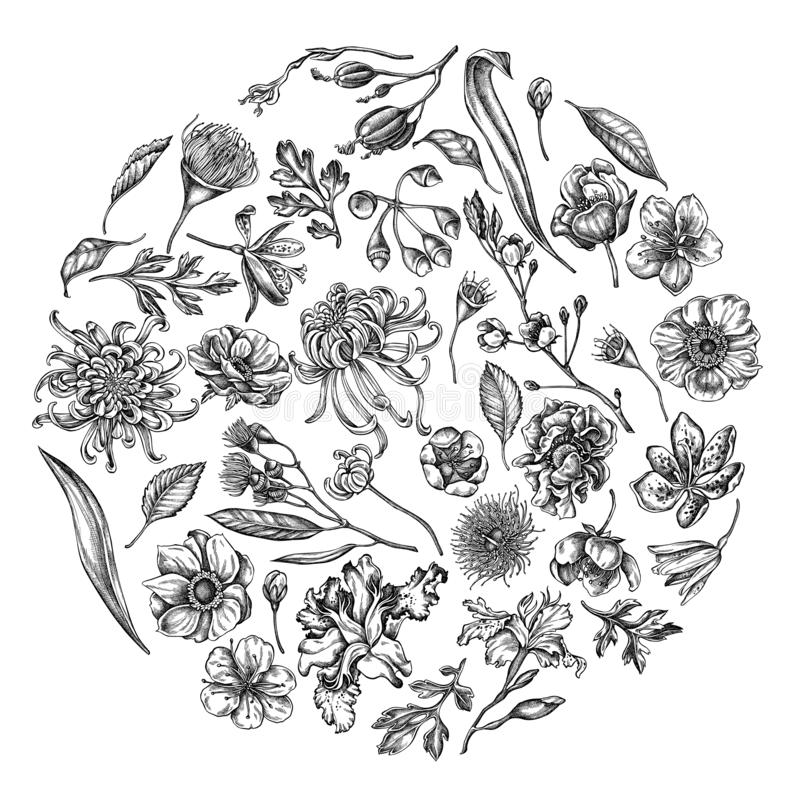 与黑白日本菊花,黑莓百合,玉树花,银莲花属,虹膜的圆的花卉设计 向量例证