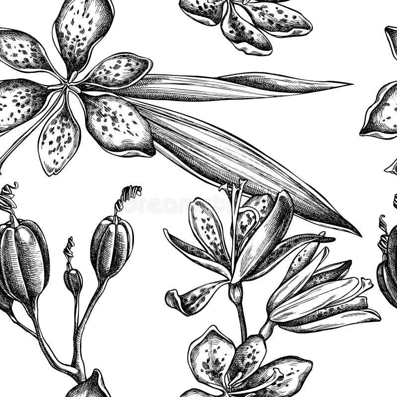 与黑白黑莓百合的无缝的样式 库存例证