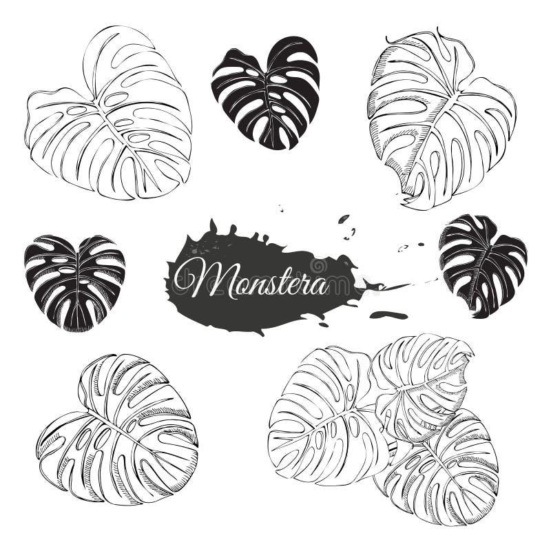 与黑白monstera叶子和抽象斑点的汇集 在白色背景隔绝的手拉的墨水剪影 皇族释放例证