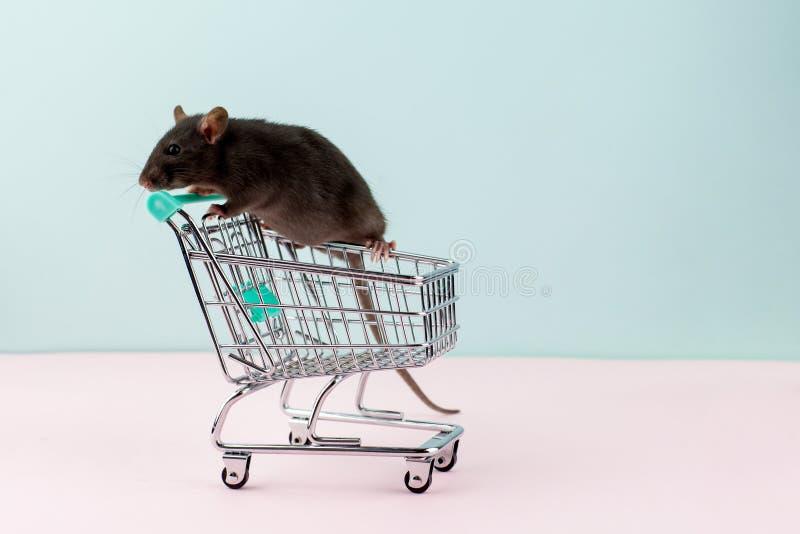 与鼠的最小的shoping的概念在杂货台车 免版税库存照片