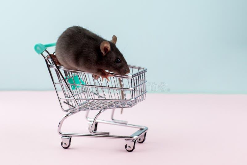 与鼠的最小的shoping的概念在杂货台车 库存照片