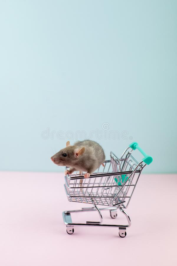 与鼠的最小的shoping的概念在杂货台车 图库摄影