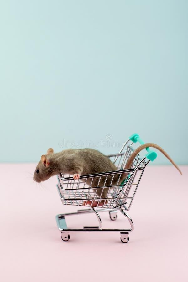与鼠的最小的shoping的概念在杂货台车 免版税图库摄影