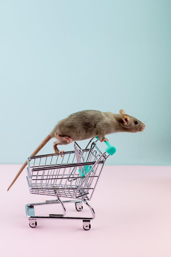 与鼠的最小的shoping的概念在杂货台车 免版税库存图片