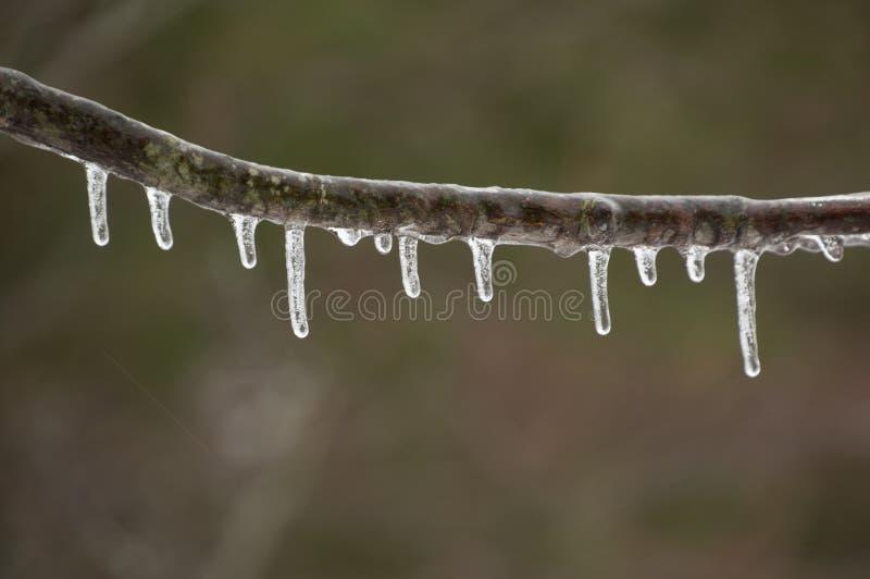 与滴下在冰暴以后的冰柱的唯一分支 免版税图库摄影