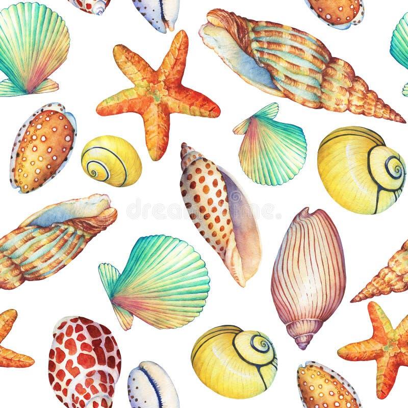与水下的生活对象的无缝的样式,在白色背景 海洋设计壳,海星 手拉的水彩 皇族释放例证